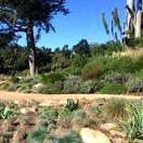 botanical gardens, san francisco