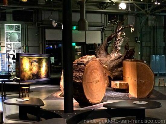 exploratorium, san francisco, redwood at night