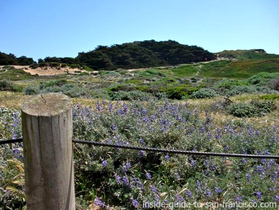 on the path to the ocean, looking uphill, fort funston