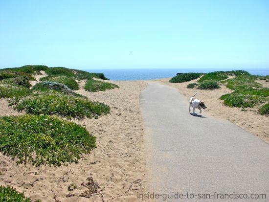 dog on path at fort funston