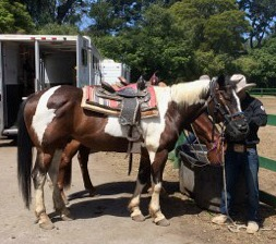 Saddled horse in Golden Gate Park