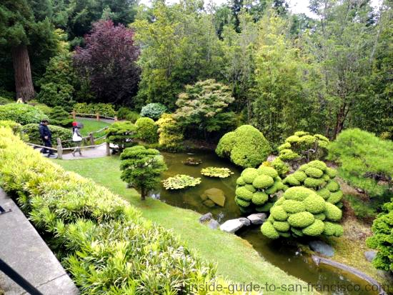 after wandering through the tranquil gardens you can sit in the natural setting of the tea house and enjoy authentic japanese refreshments - Japanese Koi Garden