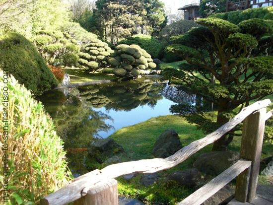 japanese tea garden, san francisco, tranquil pond