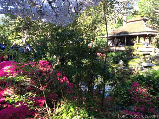 japanese-tea garden in spring, view of tea house