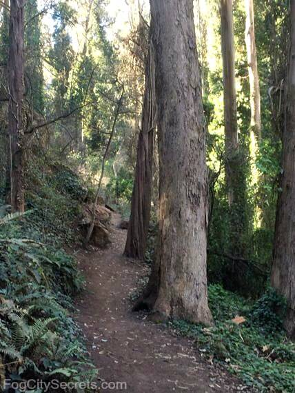 historic trail, mount sutro