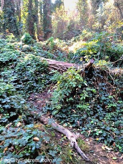 mount sutro trail near belgrave avenue