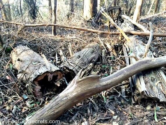 cut trees, mount sutro