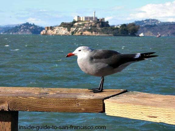 pier 39 san francnsco, view of alcatraz