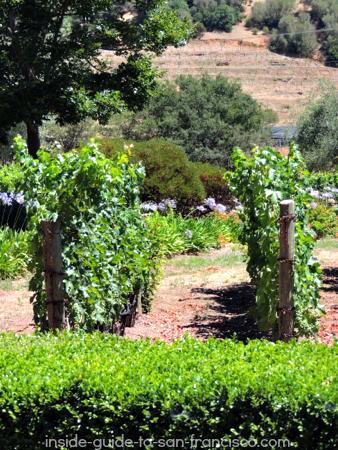 pine ridge vineyards