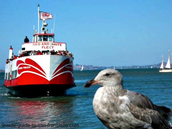 san francisco bay cruises, red and white ferry