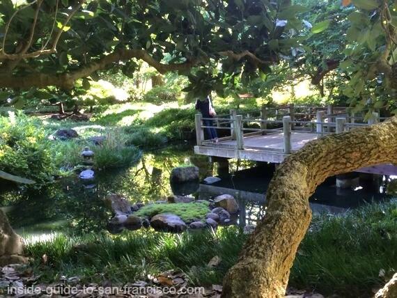 botanical gardens san francisco, moon viewing garden