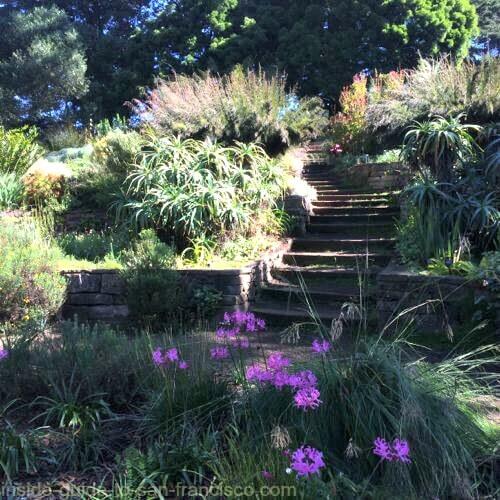 botanical gardens san francisco, shady path