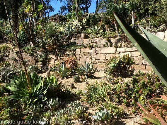 botanical garden san francisco, succulent garden