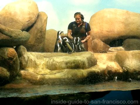 california academy of sciences, penguin feeding