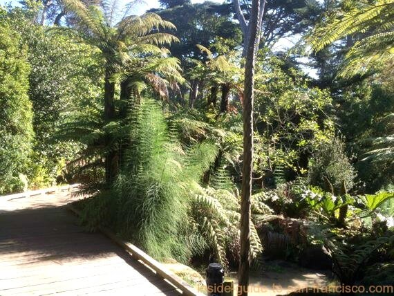 botanical garden san francisco, ancient plants walkway