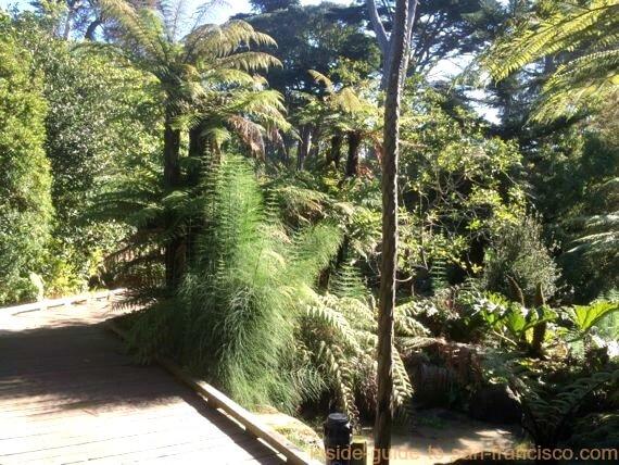 botanical gardens san francisco, ancient plants walkway