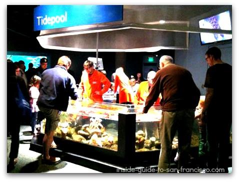 tidepool exhibit, steinhart aquarium