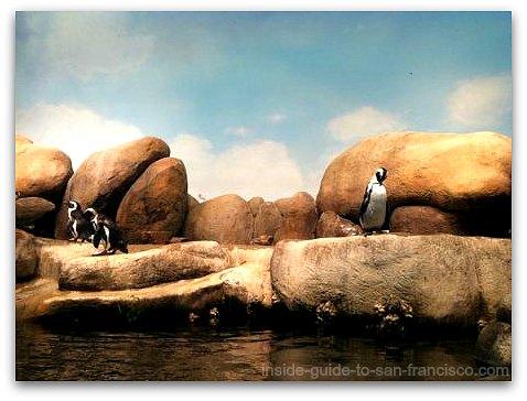 penguins, academy of sciences museum, san francisco