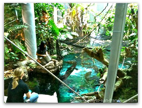 feeding the fish, california academy of sciences