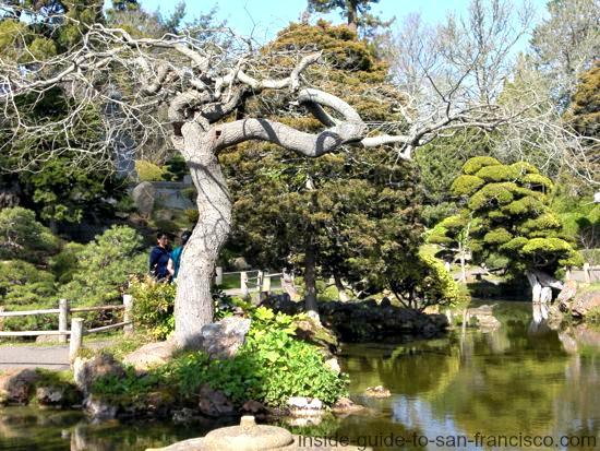 japanese tea garden in winter, golden gate park