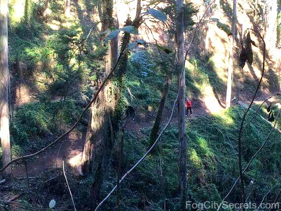 mount sutro historic trail, woodland creek ravine