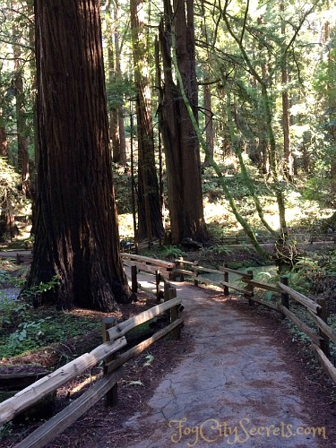 trail through redwoods in muir woods