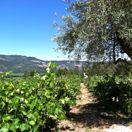 napa wineries thumbnail