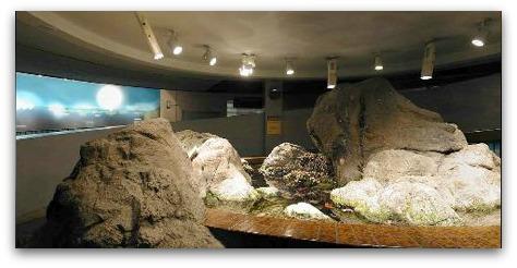 old tidepool, steinhart aquarium