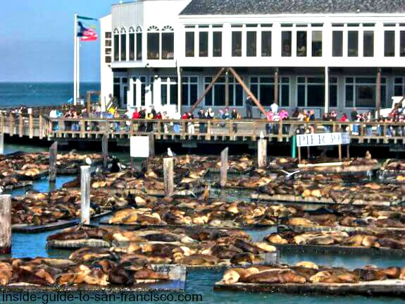 pier 39 san francisco, sea lions