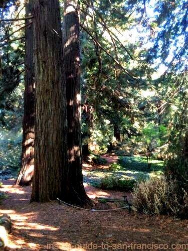 botanical gardens san francisco, redwood grove
