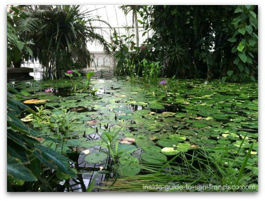 lily pond, san francisco conservatory of flowers