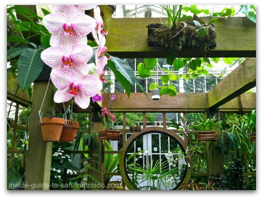 wood arbor with orchid, san francisco conservatoryof flowers