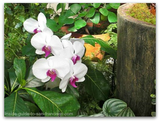white orchid, san francisco conservatory of flowers