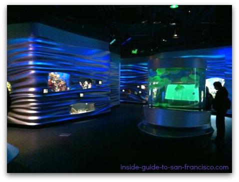steinhart aquarium, san francisco, quiet day