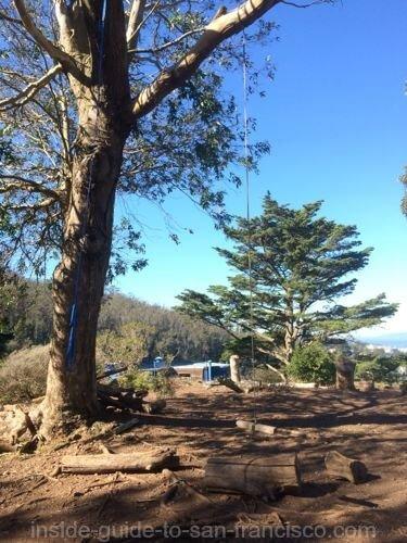 tank hill, san francisco, rope swing