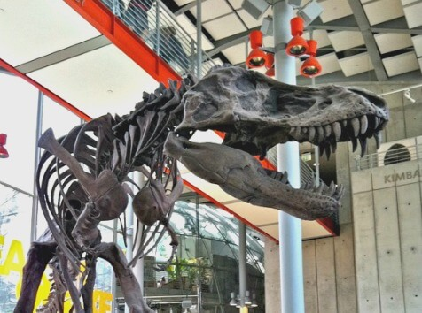 Head of T-rex, California Academy of Sciences, San Francisco