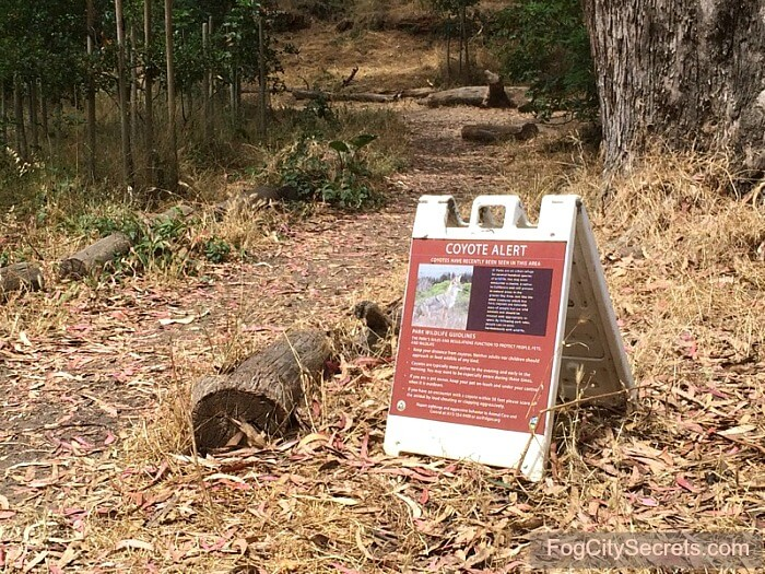 Coyote warning sign in Pine Lake Park