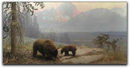 Bears in Montana, California Academy of Sciences