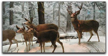 Deer in winter window display