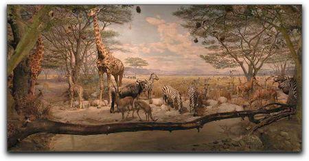 African watering hole exhibit, earlier Academy of Sciences display