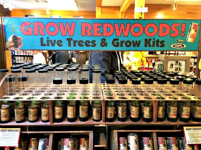 baby redwood trees for sale, muir woods gift shop