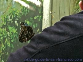 Butterfly on sleeve, in the Rainforest of the Academy of Sciences Museum