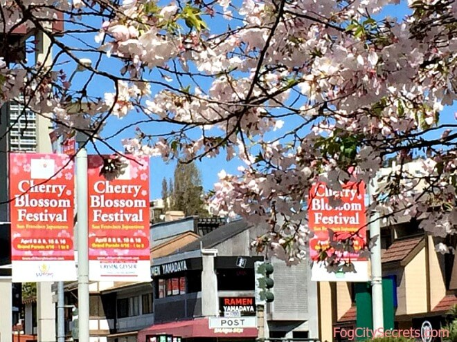 cherry blossom festival signs, san francisco japantown