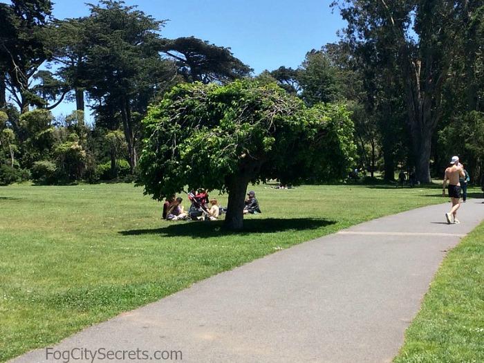 Janis Joplin Tree, Golden Gate Park