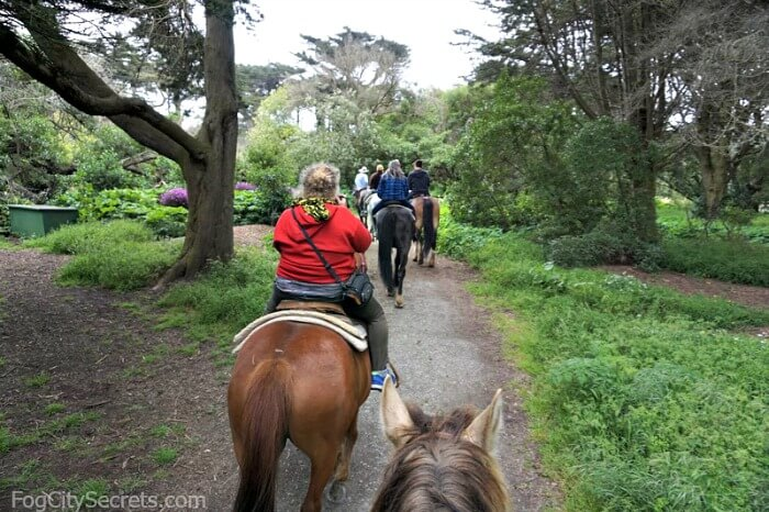 Horseback riding in Golden Gate Park, line of horses on a trail