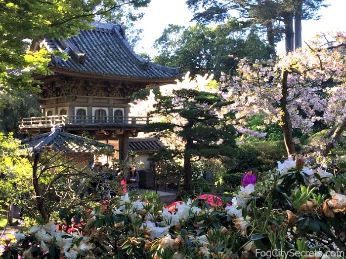 Springtime flowers and entrance gate at the Japanese Tea Garden in Golden Gate Park