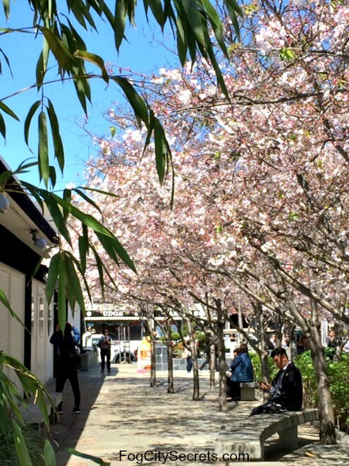 cherry blossoms on trees at japan center, san francisco