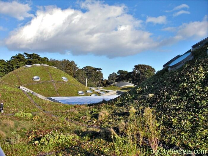 Living roof at the California Academy of Sciences, San Francisco