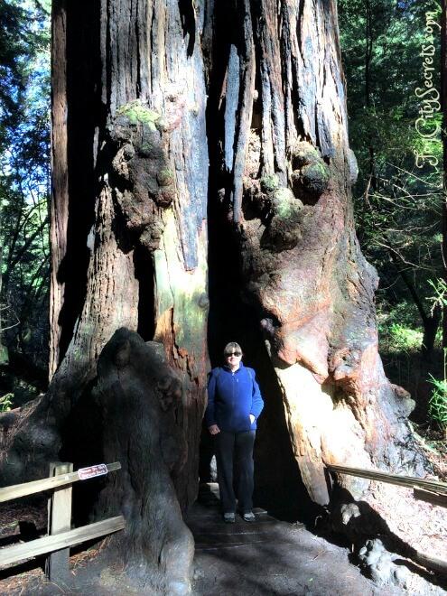 posing by huge redwood in bohemian grove, muir woods