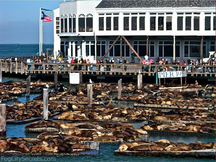 Pier 39 San Francisco Tips From A Local Fog City Secrets